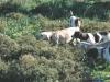 Τα σκυλιά της Kefalonia Game Farm πάνω στη «φέρμα»